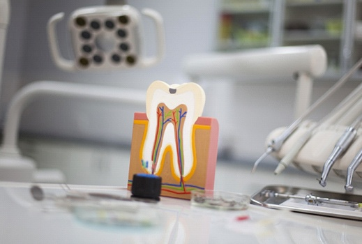 a model of the inside of a mouth sitting on a counter in a dentist's office